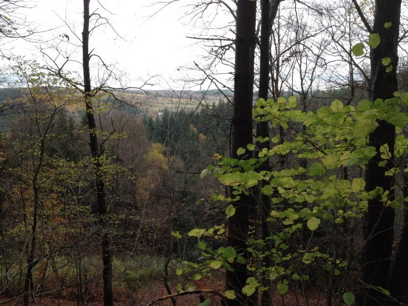 Waldblick bei Annarode.