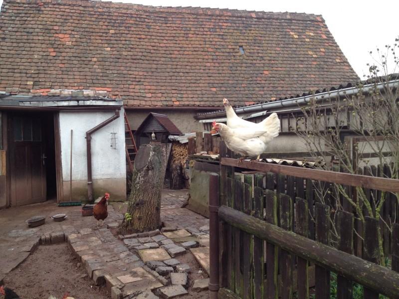 Hühnerhof in Annarode.