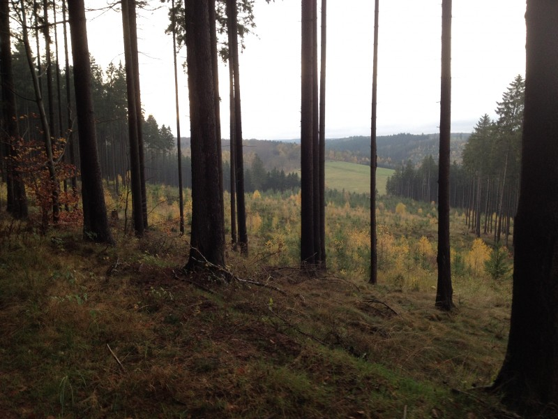 Wald in der Nähe von Annarode.