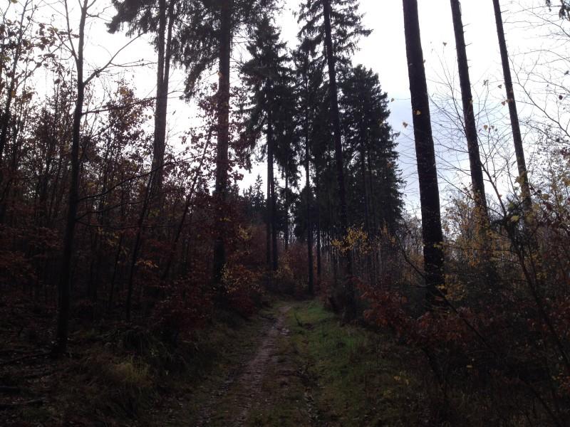 Wander- und Radweg durch den Wald zwischen Gorenzen und Annarode.