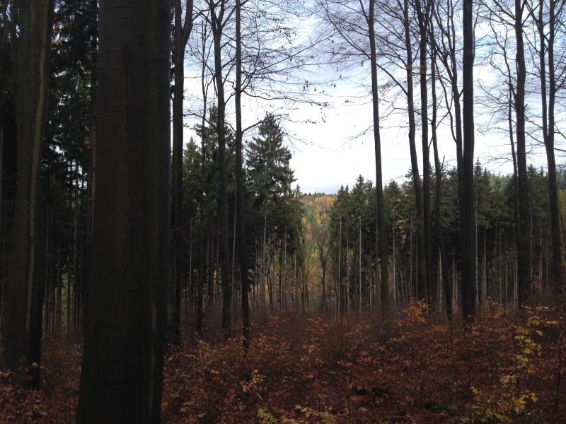 Blick in den Wald vom Wander- und Radweg zwischen Gorenzen und Annarode.