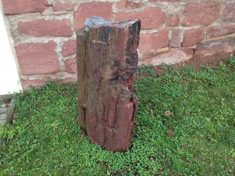 Versteinerter Baumstamm zur Zierde vor einem Privathaus in Annarode.