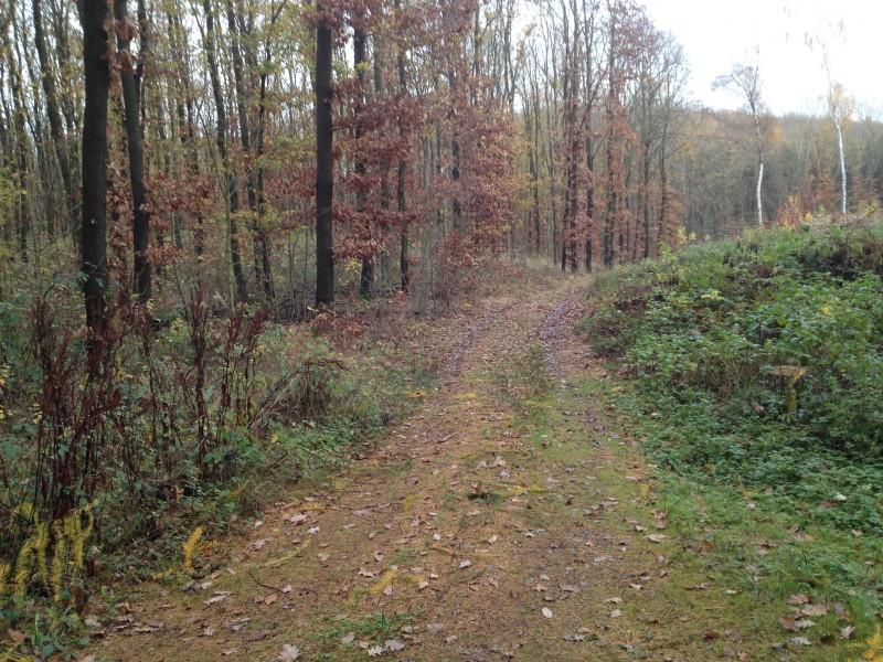 Waldweg von Siebigerode nach Möllendorf.